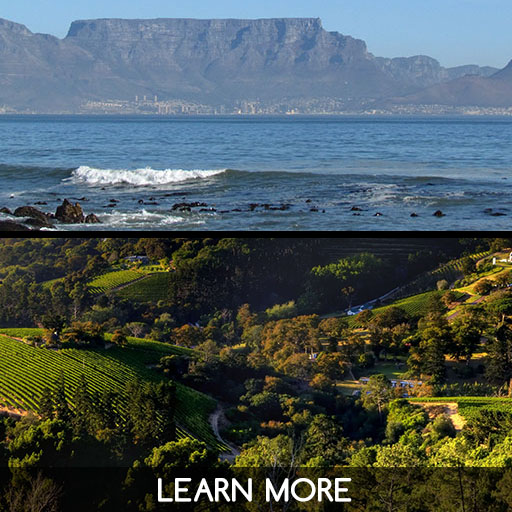 Cape point and Stellenbosch tour from Cape Town